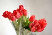 Тюльпаны по самым низким ценам