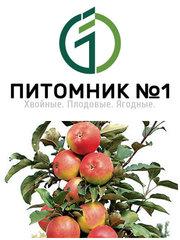 Саженцы яблонь колоновидных.