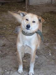 Ищете щенка или собаку для охраны дома в Алматы?