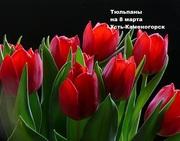 Тюльпаны на 8 марта Усть-Каменогорск