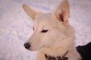 Снежок из приюта Хвостатый Рай
