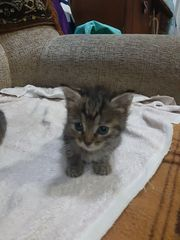 Милые котятки ищут дом